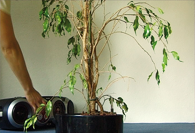 Teaching a Plant ...